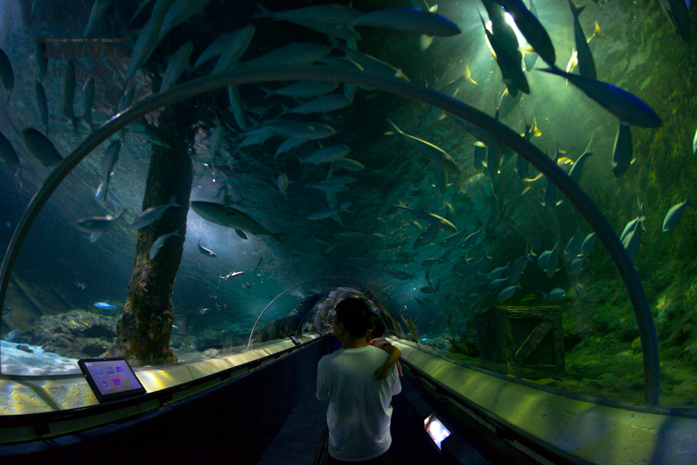 Aquarium After Dark at Kelly Tarlton's