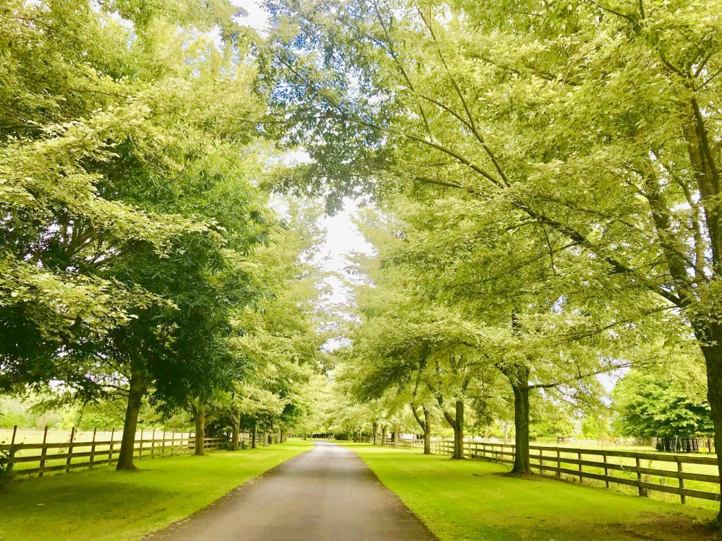 Tree Driveway for websites-low