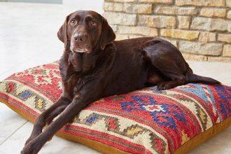 Dog rests on the vegan Taurus pillow