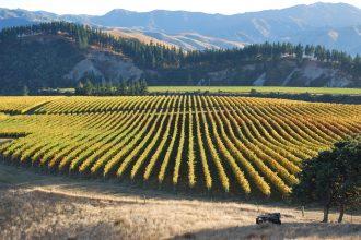 Vineyard plains.