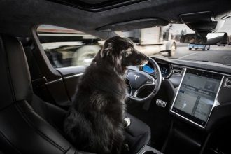 Dog at the wheel of an autonomous car.
