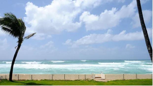 The Hawaiian beachfront.