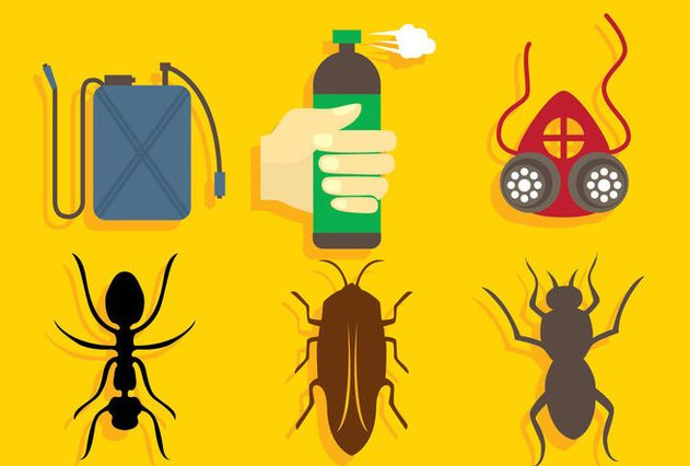 Graphic of common hotel pests.