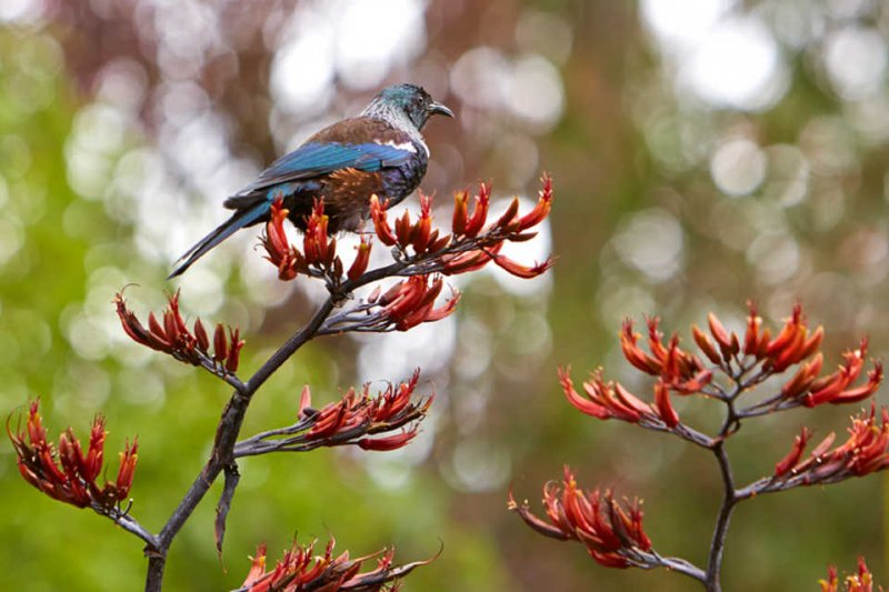 Bird in the flowers in nature.