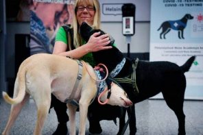 Could Coronavirus-Sniffing Dogs Help Save Air Travel?
