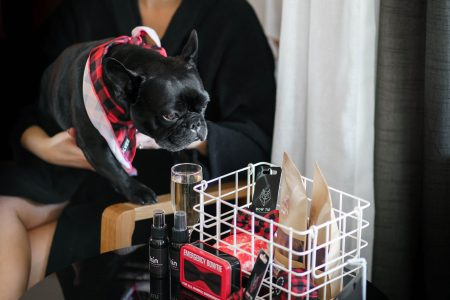 mini bar for dogs